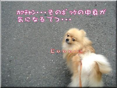 b0078073_22594098.jpg