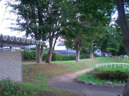 自然が制作した屋根緑化_c0087349_16245366.jpg