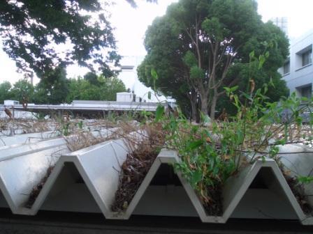 自然が制作した屋根緑化_c0087349_1625164.jpg