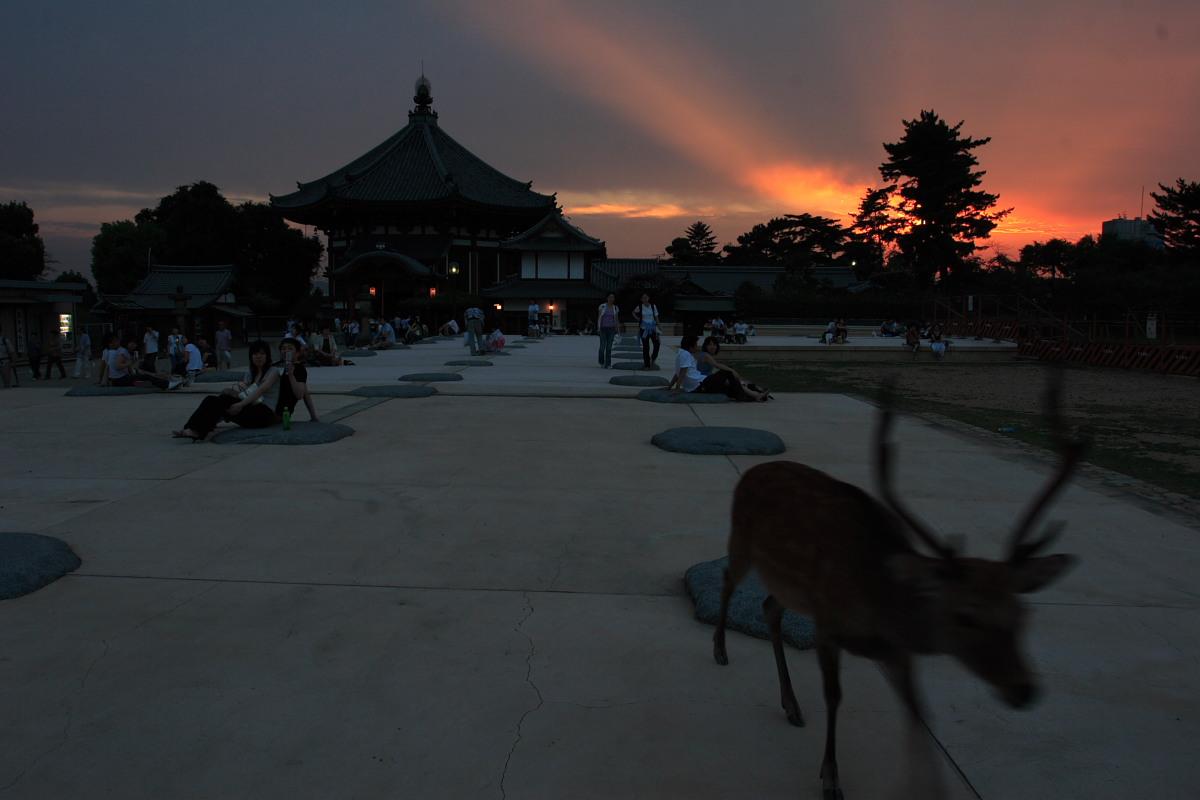 奈良 興福寺 ライトアップ_f0021869_10113342.jpg
