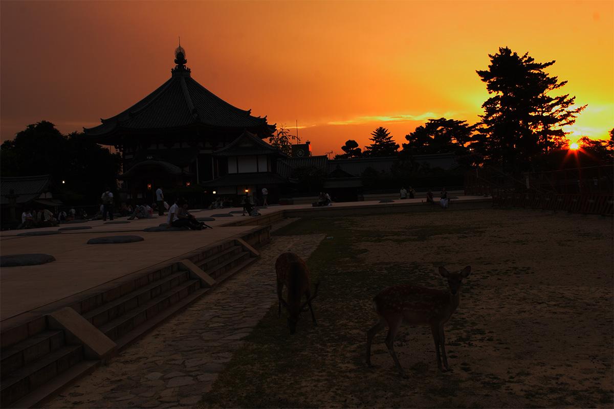 奈良 興福寺 ライトアップ_f0021869_101233.jpg