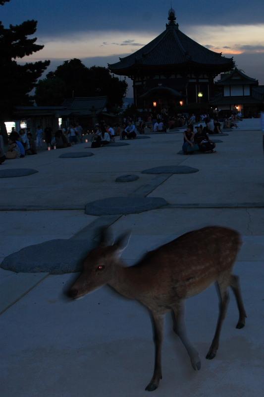 奈良 興福寺 ライトアップ_f0021869_10143713.jpg