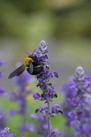熊蜂の飛行_f0037633_21415477.jpg