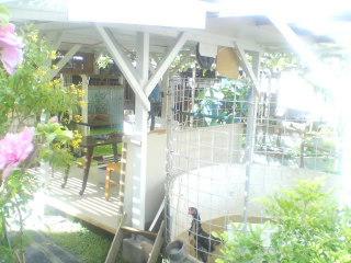 私的景観賞:那覇市牧志のお庭_d0053751_80344.jpg