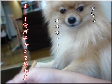 b0078073_22453343.jpg