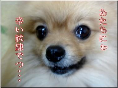 b0078073_22482158.jpg