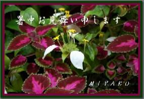 c0009275_142762.jpg