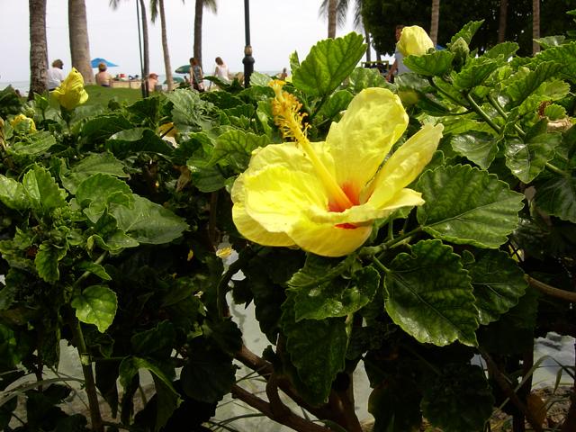 南の楽園 ハワイ_d0074828_22242791.jpg