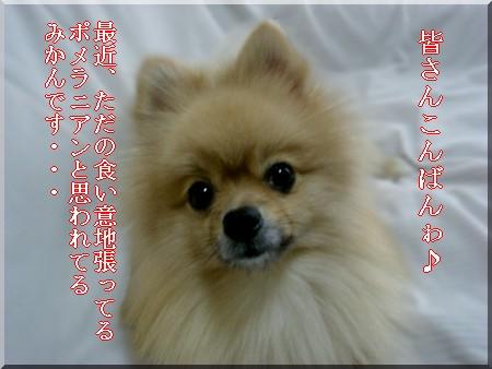 b0078073_2241314.jpg