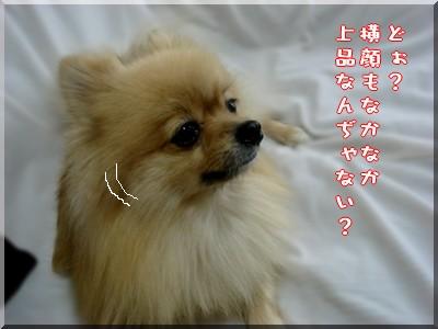 b0078073_22455765.jpg