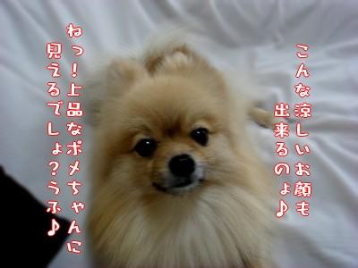 b0078073_22484610.jpg
