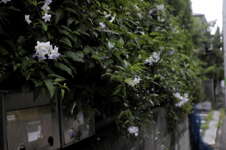 路傍の花々シリーズ(ただし初台)_f0042194_2051335.jpg
