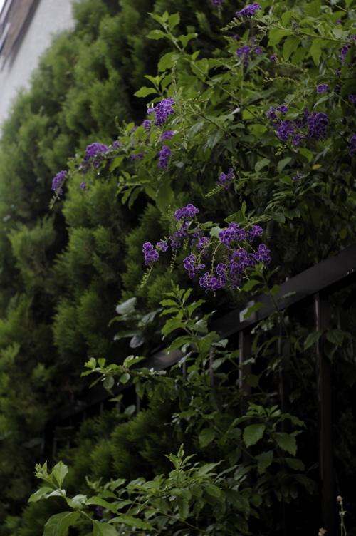 路傍の花々シリーズ(ただし初台)_f0042194_2052168.jpg
