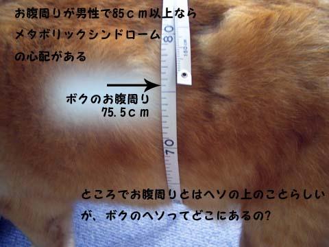 b0019313_1647656.jpg