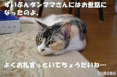 f0063729_22481640.jpg