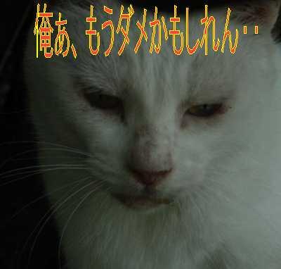 e0022736_11242569.jpg