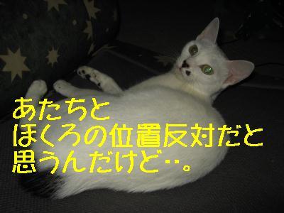 e0085147_3561451.jpg