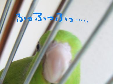 b0082757_18844.jpg