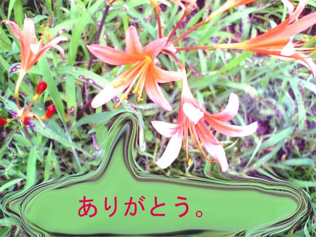 f0097101_177082.jpg