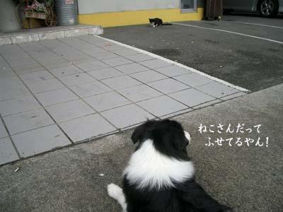 b0090938_20105213.jpg