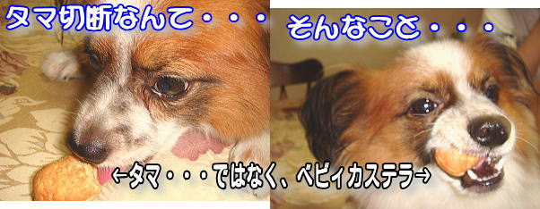 f0011845_23223523.jpg