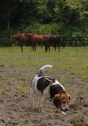 牧場パトロール犬_a0070350_0193596.jpg