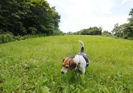 牧場パトロール犬_a0070350_0195073.jpg