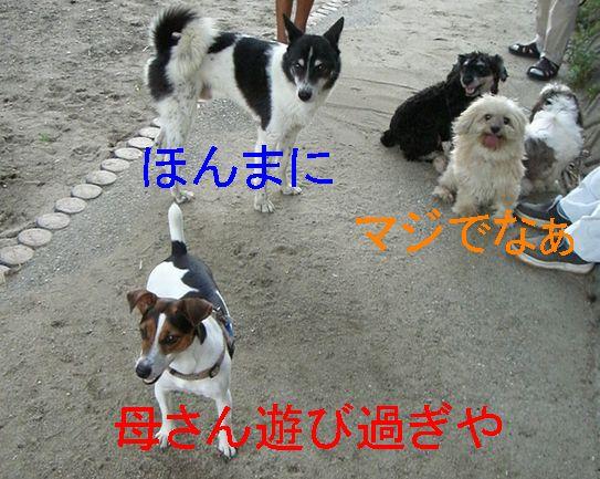 f0053952_16133248.jpg