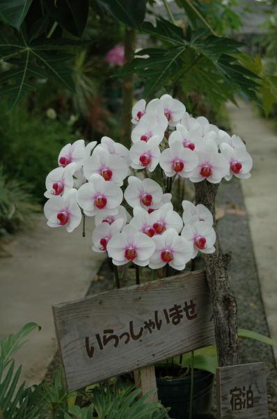 九州旅行~その2~_b0077681_1912404.jpg