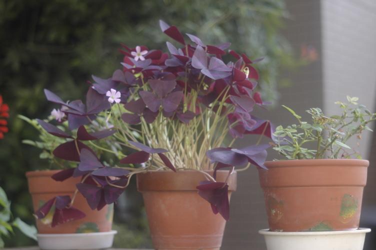 路傍の花々シリーズ(ただし初台)その2_f0042194_0534171.jpg
