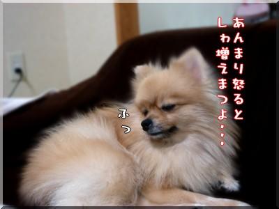 b0078073_23165180.jpg