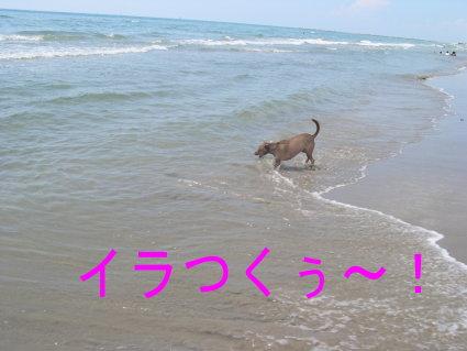 e0052725_1553396.jpg