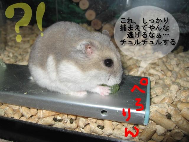 f0097734_15375981.jpg