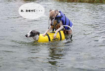 f0094391_22201239.jpg