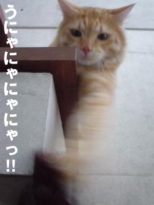 b0080632_1573348.jpg