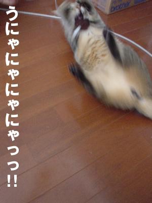 b0080632_221428.jpg
