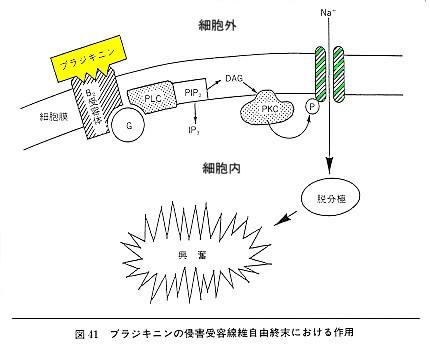 神経根ブロックの電撃痛について_b0052170_19444538.jpg