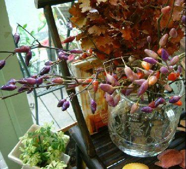 オークリーフ(秋の匂い。)_f0049672_14551169.jpg