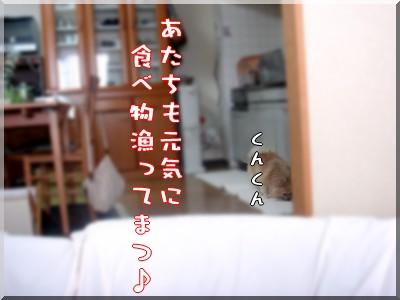 b0078073_016325.jpg