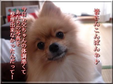 b0078073_055652.jpg