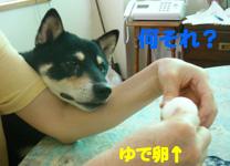b0057675_925833.jpg