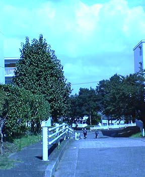 f0033079_9121437.jpg