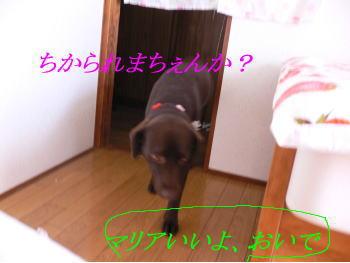d0013645_12205174.jpg
