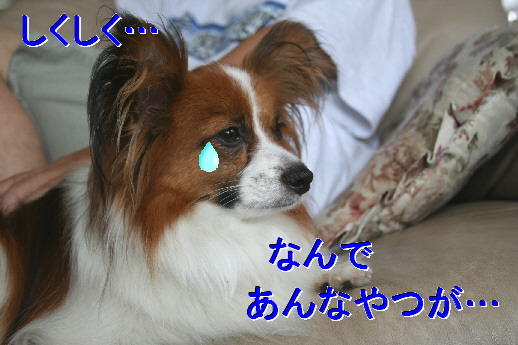 d0013149_0145142.jpg