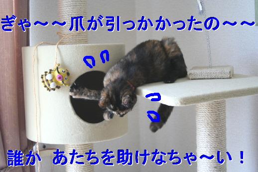 d0013149_23394937.jpg