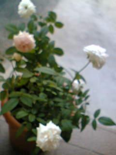 f0074659_20471522.jpg