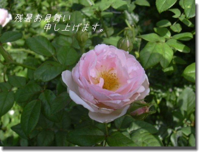 c0078586_091544.jpg