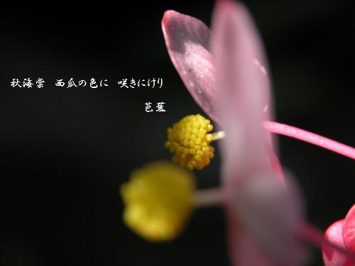 f0020521_91571.jpg