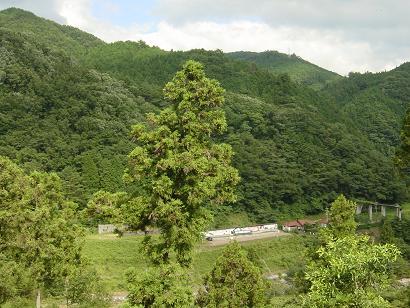 2006帰郷_a0019032_14132616.jpg