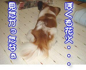 f0011845_2046497.jpg